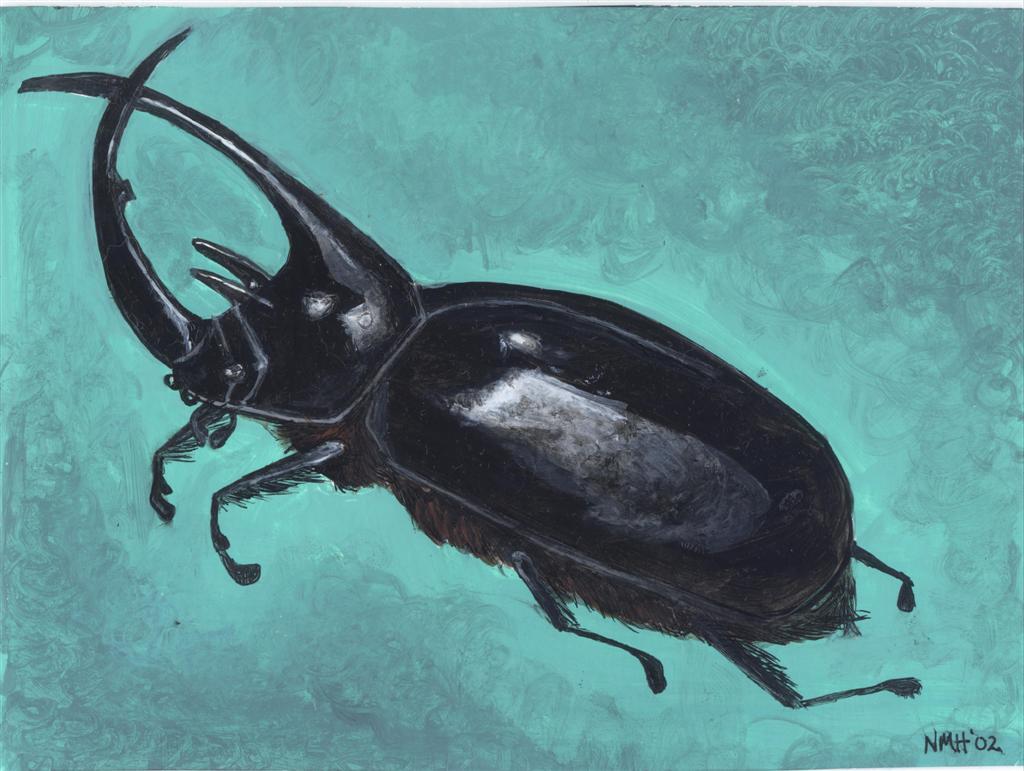 beetle-large