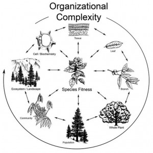 Cross talk in organizational hierarchy