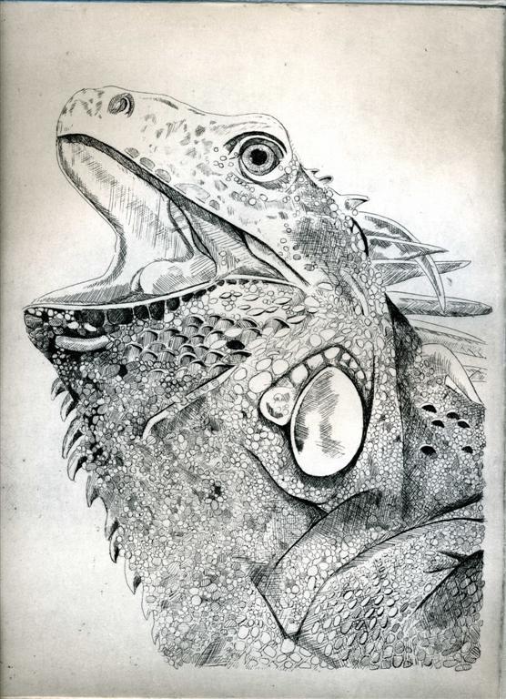 Iguana Don